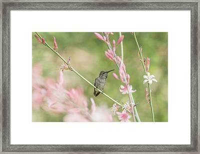 Hummingbird 7740 Framed Print by Tam Ryan