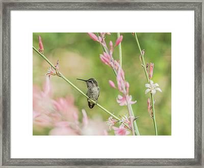 Hummingbird 7750-17 Framed Print by Tam Ryan