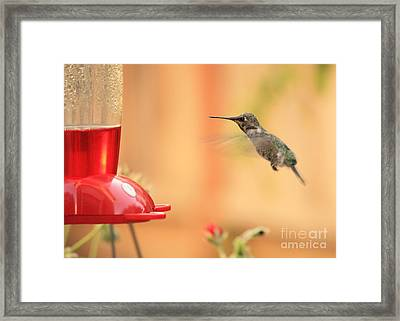 Hummingbird And Feeder Framed Print