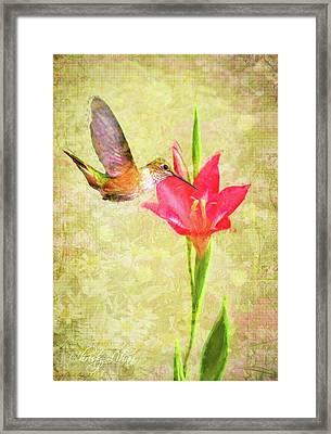 Hummingbird And Flower Framed Print