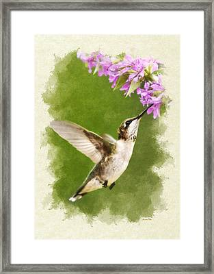 Hummingbird And Flowers Blank Note Card Framed Print