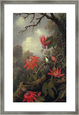 Hummingbird And Passion Flowers Framed Print by Martin Heade