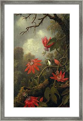 Hummingbird And Passionflowers , Martin Johnson Heade 1819-1904 Framed Print