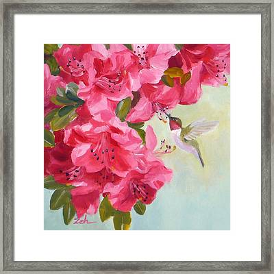 Hummingbird And Pink Azaleas Framed Print by Janet  Zeh