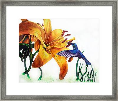 Hummingbird And Yellow Flower Framed Print