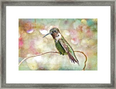Hummingbird Art Framed Print by Bonnie Barry