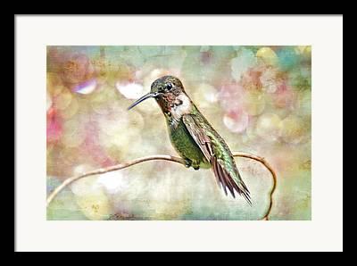Hummingbird On Vine Framed Prints