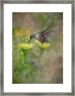 Hummingbird Art Framed Print by Ron Grafe