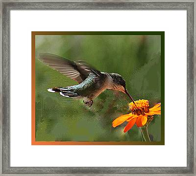 Hummingbird Art Framed Print
