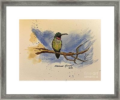 Hummingbird At Rest Framed Print