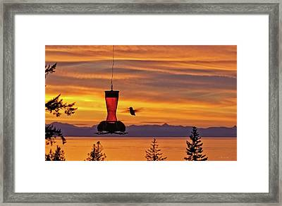 Hummingbird At Sunset. Framed Print