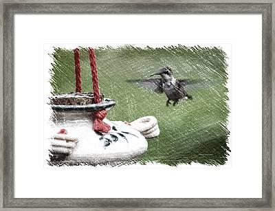 Hummingbird At The Feeder Pa 01 Framed Print