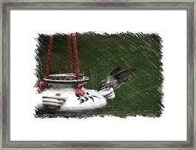 Hummingbird At The Feeder Pa 02 Framed Print