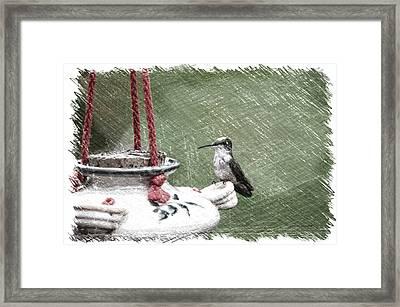 Hummingbird At The Feeder Pa 04 Framed Print