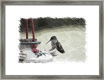 Hummingbird At The Feeder Pa 05 Framed Print