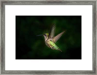 Hummingbird B Framed Print