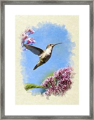 Hummingbird Beauty Blank Note Card Framed Print