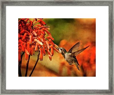 Hummingbird Breakfast Arizona Style  Framed Print by Saija Lehtonen