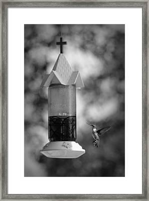 Hummingbird - Bw Framed Print