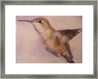 Hummingbird Framed Print by Crispin  Delgado