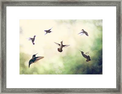 Hummingbird Dance Framed Print