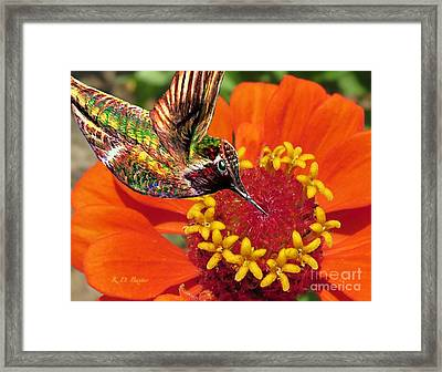 Hummingbird Delight Framed Print
