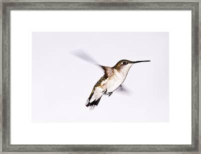Hummingbird Framed Print by Edward Myers