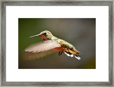 Hummingbird Facing Left Framed Print