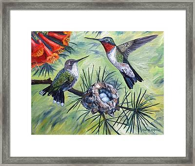 Hummingbird Family Framed Print