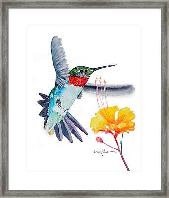 Da169 Hummingbird Flittering Daniel Adams Framed Print