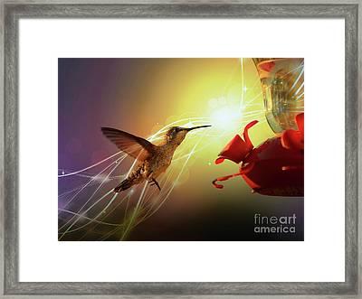 Hummingbird Golden Hour Framed Print by Carol Groenen