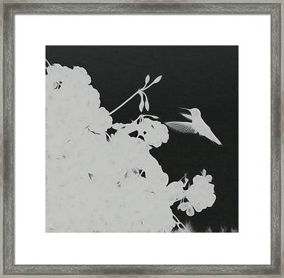 Hummingbird Haze Framed Print
