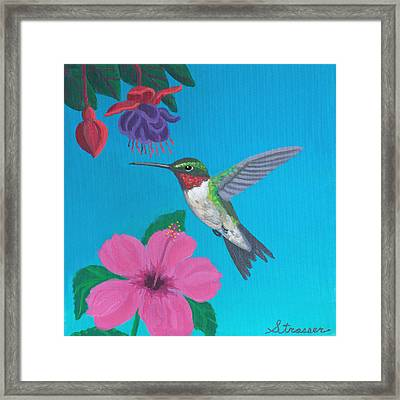 Hummingbird Heaven Framed Print by Frank Strasser