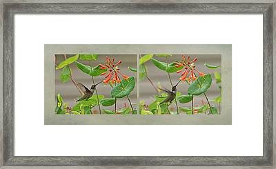Hummingbird In Afternoon Framed Print by Sandy Keeton