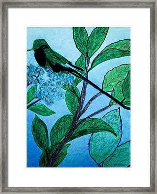 Hummingbird In Evening Framed Print by Debra Lynch