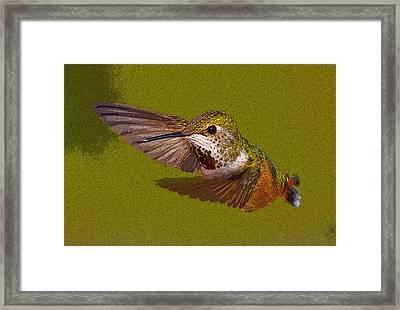 Hummingbird In Flight- Abstract Framed Print by Tim Grams