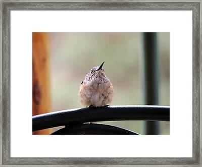 Baby Hummingbird Framed Print
