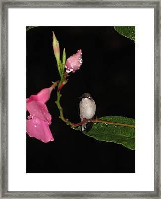 Hummingbird In The Evening Framed Print by Linda Weaver