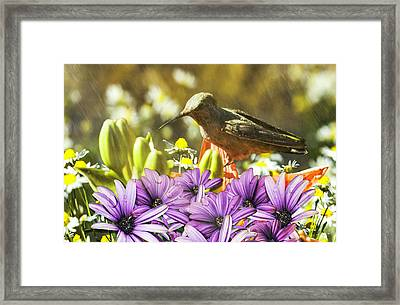 Framed Print featuring the photograph Hummingbird In The Spring Rain by Diane Schuster
