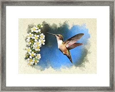 Hummingbird Just Looking Blank Note Card Framed Print