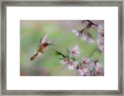 Hummingbird Framed Print by Lori Deiter