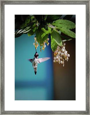 Hummingbird Moment Framed Print by Mark Dunton