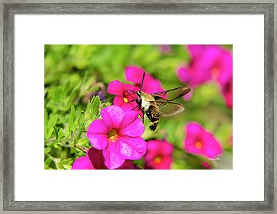Framed Print featuring the photograph Hummingbird Moth by Christina Rollo