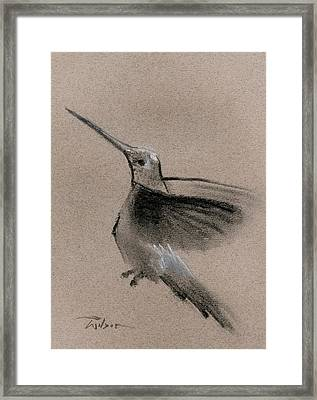 Fine Art Charcoal Rendering Of A Hummingbird In Flight. Framed Print by Ron Wilson