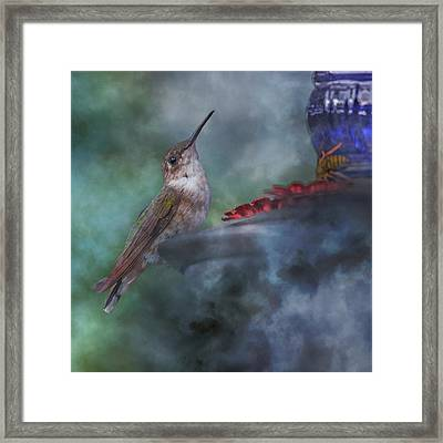 Hummingbird Mystic Mist Framed Print