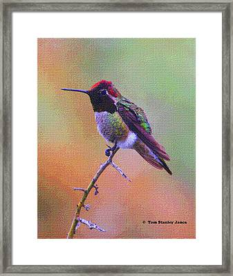 Hummingbird On A Stick Framed Print