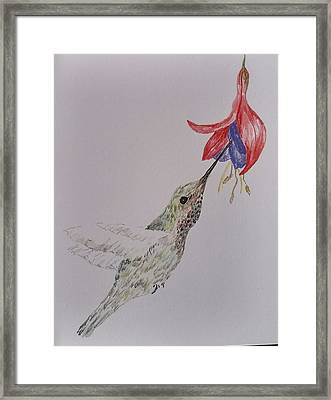 Hummingbird On Fushia Framed Print by Sally Atchinson