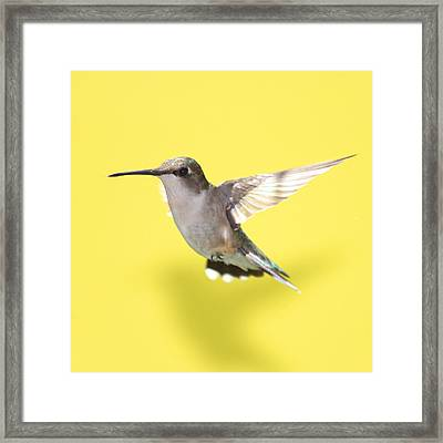 Hummingbird On Yellow 1 Framed Print
