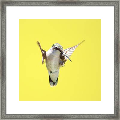 Hummingbird On Yellow 2 Framed Print