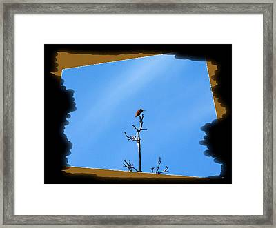 Hummingbird Optical Zoom Framed Print by Will Borden